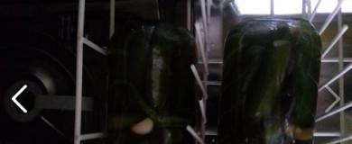 Bulaşık Makinasında Turşu Yapmak